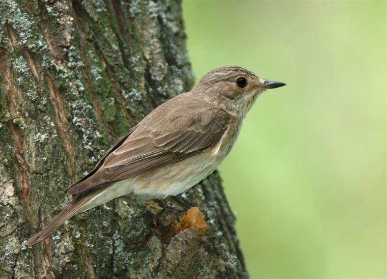 Каждой птице свой дом, фото № 13