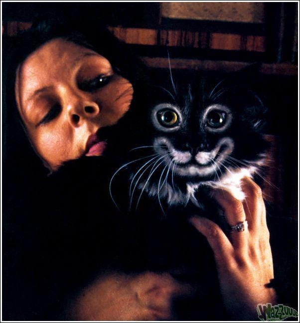 Зачем красить кошек?, фото № 31