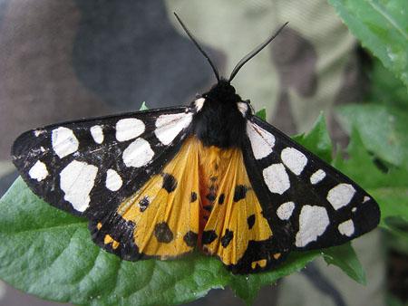 бабочки, вдохновение