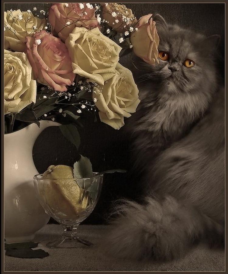 спасается хорошего вечера кошки картинки читатели