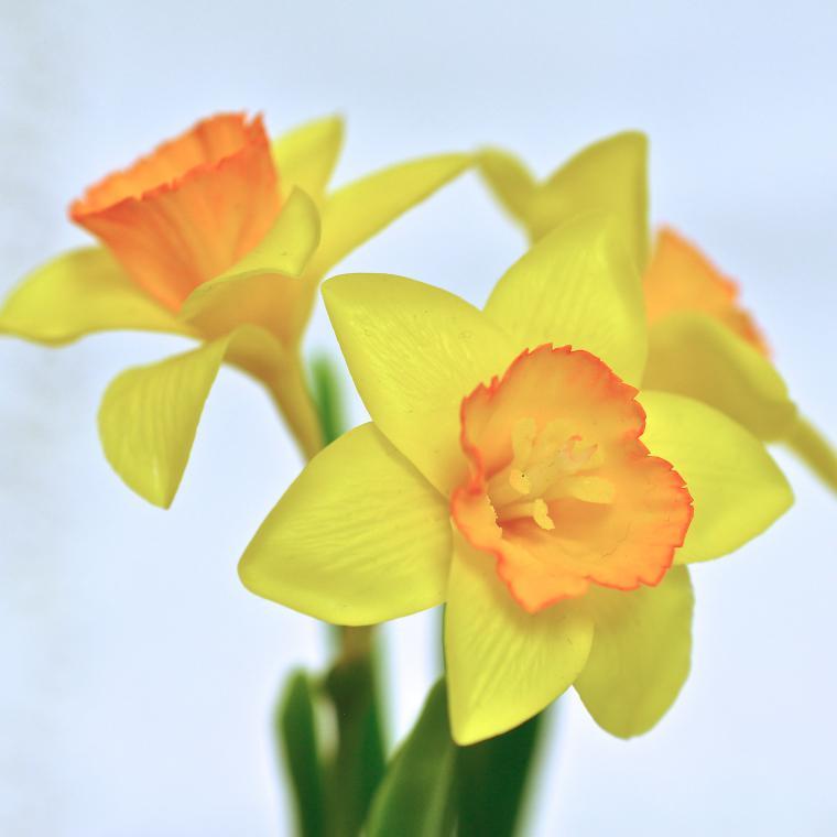Подарок цветок нарцисс 37