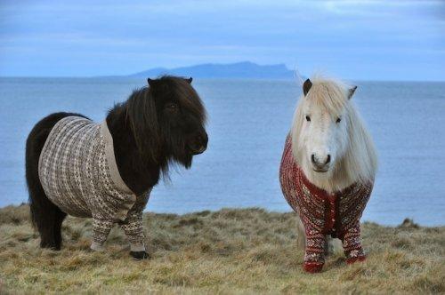 А пони - тоже кони!, фото № 1