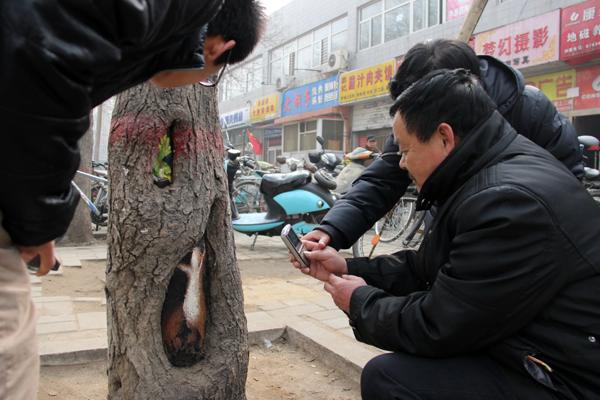 Tree-art, или Роспись деревьев, фото № 2