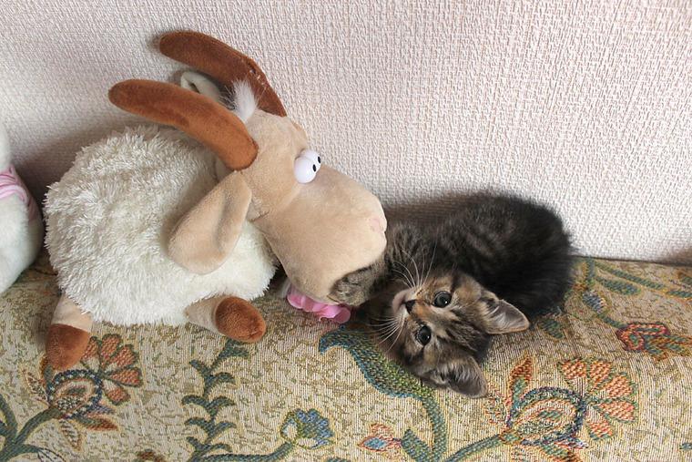 коты, домашние животные
