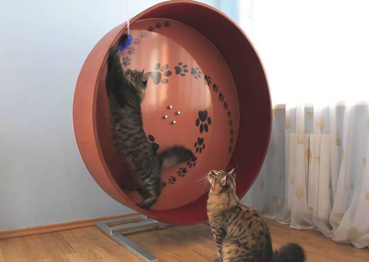 Беговое колесо для кошек сделать своими руками 12