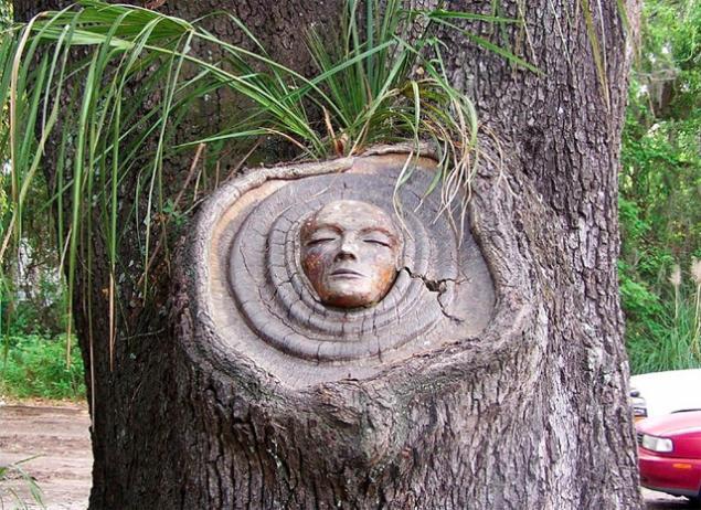 духи деревьев