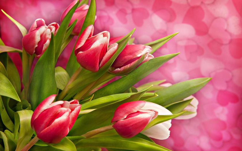 Обои Тюльпаны Цветы Фото 303875