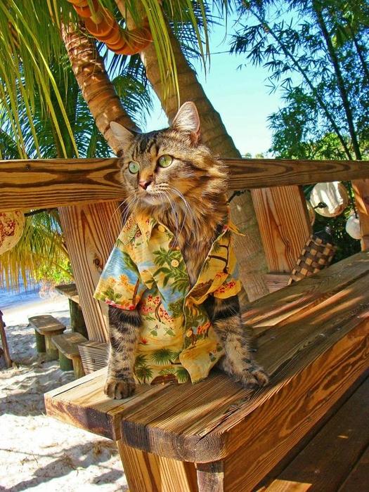 фото кота лоренцо