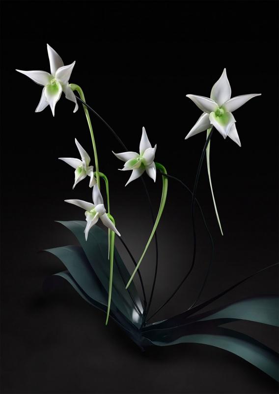 стеклянные орхидеи