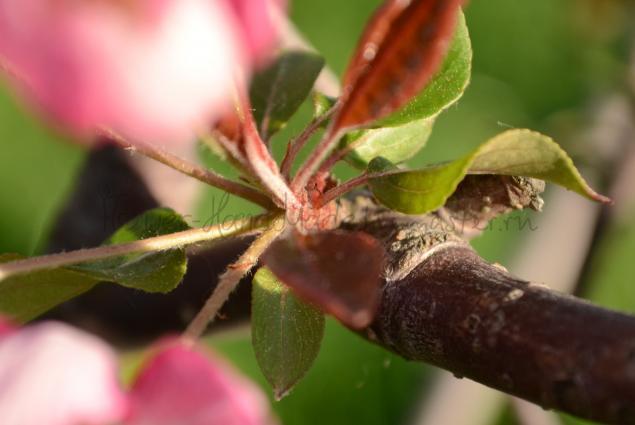 детали цветов