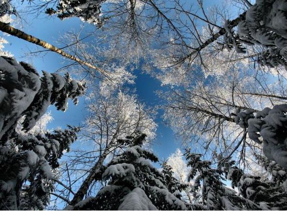 Морозной зимой, фото № 19