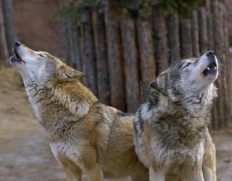 Павел сидоров телохранитель волковой фото фотографировать