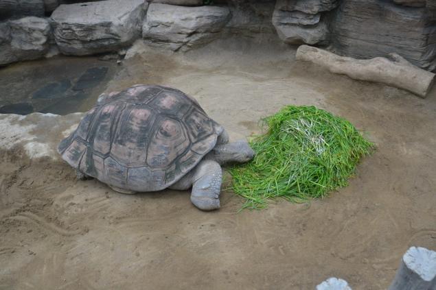 Дикий забег по Токио за 7 дней. День пятый. Зоопарк Уэно и детские магазины., фото № 38