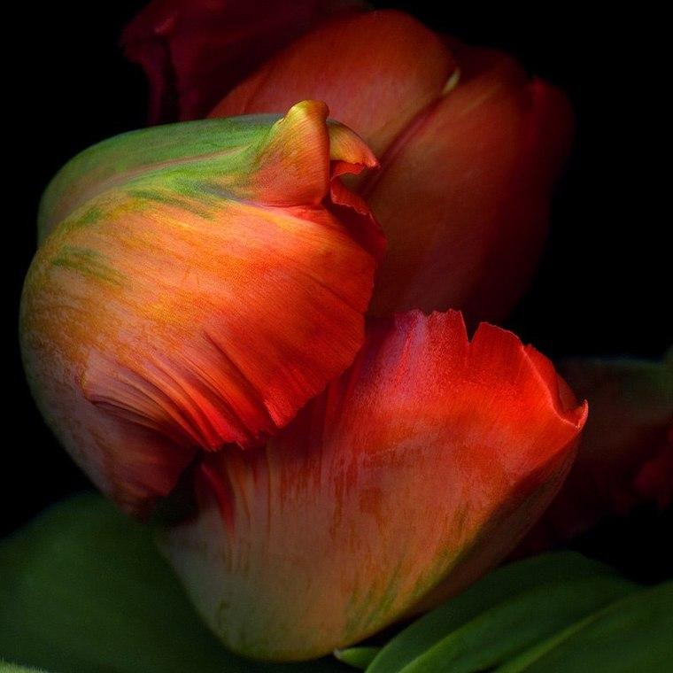 Фото цветы профессионалы