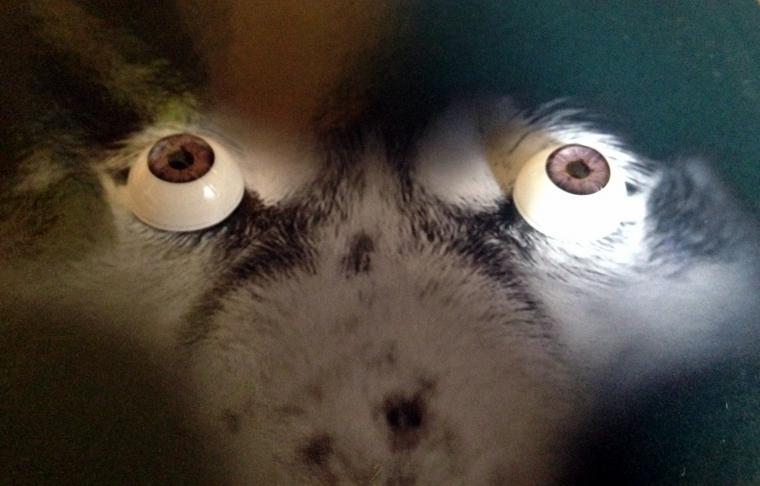 глаза, живой взгляд