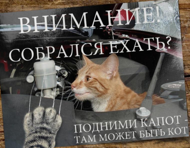 автомобилист, автомобиль, машина, бездомные животные, кот, коты, кошки