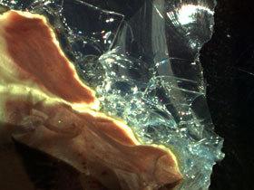Обыкновенные опалы: Гидрофан