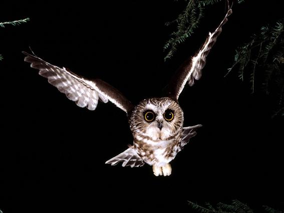 ночь, клуб ночные птицы