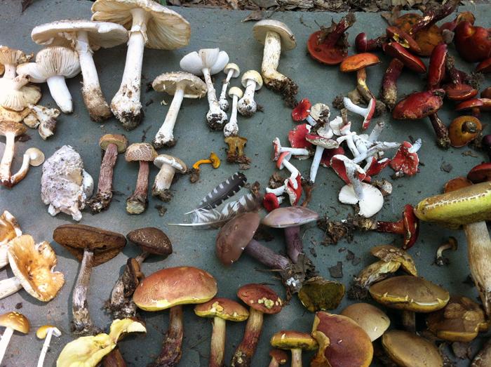 грибы, история рукоделия