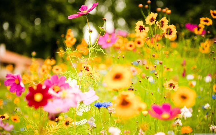 картинки лето красивые на рабочий стол фото № 493311  скачать