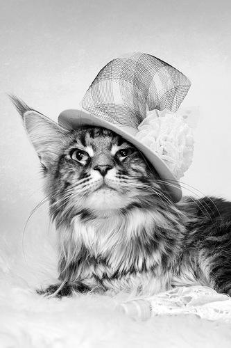кошка, фотография