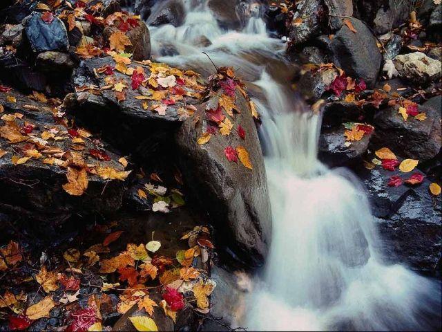 янтарная осень