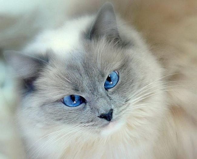 кот, вдохновение, крылатый кот, идеи для творчества