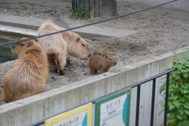 Дикий забег по Токио за 7 дней. День пятый. Зоопарк Уэно и детские магазины., фото № 16