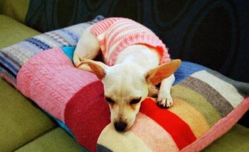 赋予旧毛衣一个新的生命 26: 旧毛衣的改造创意 - maomao - 我随心动