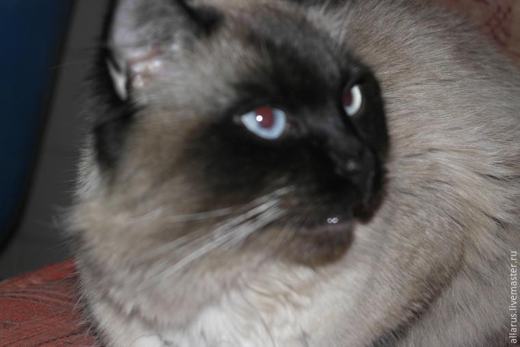 кошачья кисть