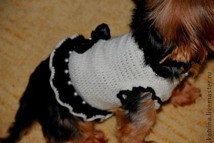 костюм собаке