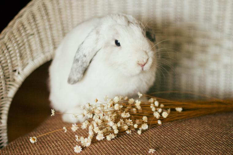фотограф, фотосессия, кролик, животные
