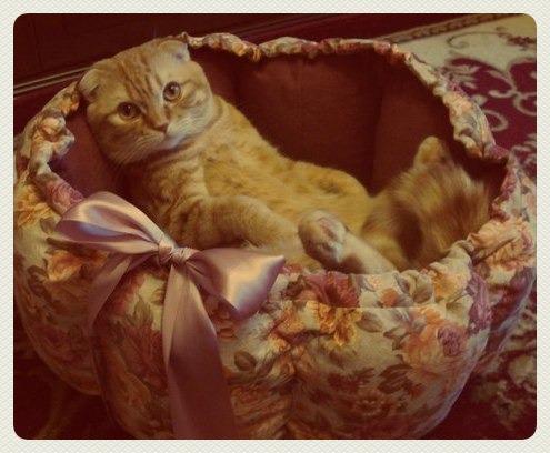 лежаки для кошек, для кошки
