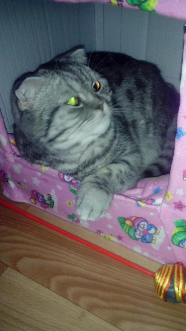 27Как сделать домик для кота из картона своими руками