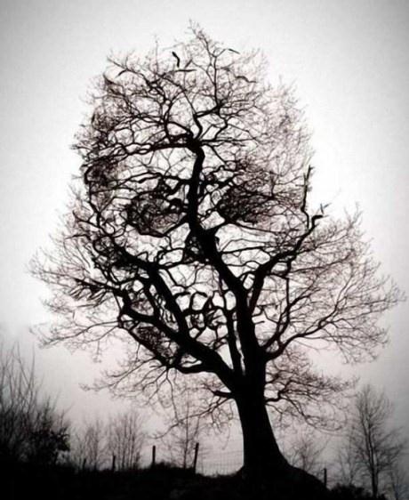 Eerie image