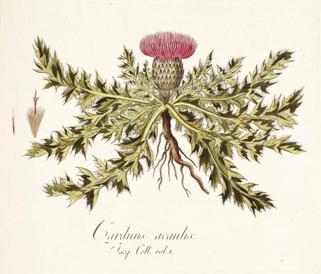 Картинки по запросу Эмблема рыцарей Ордена Чертополоха