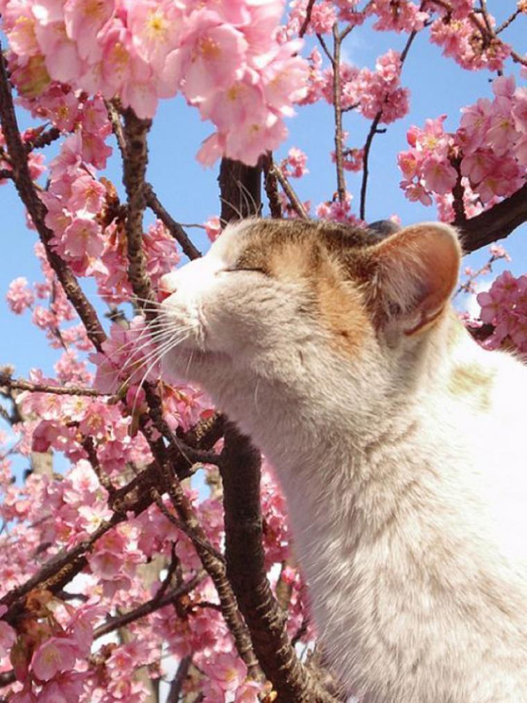кошка, мартовская кошка