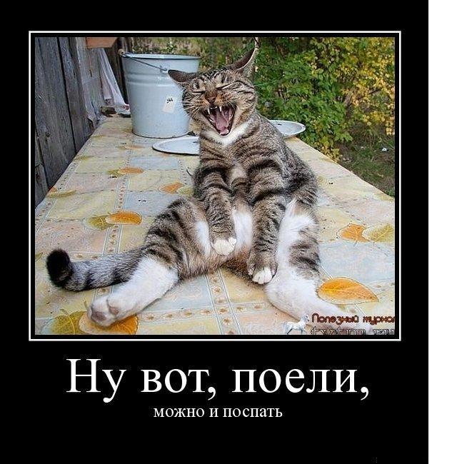 одним лучшие демотиваторы с котами успех огородников обеспечили