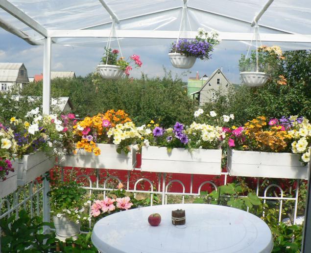 терраса, летние цветы, лето, цветущая терраса, декор
