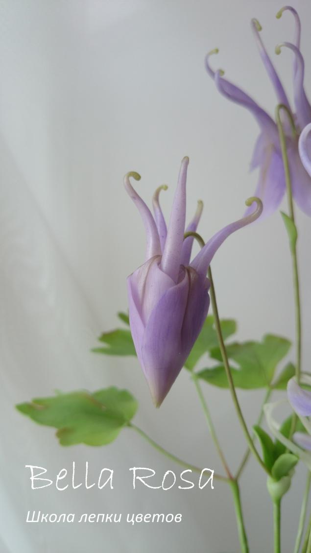 белла роза, подарок