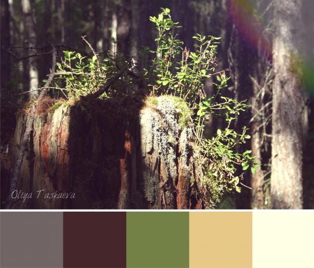 авторские цвета, коллекция