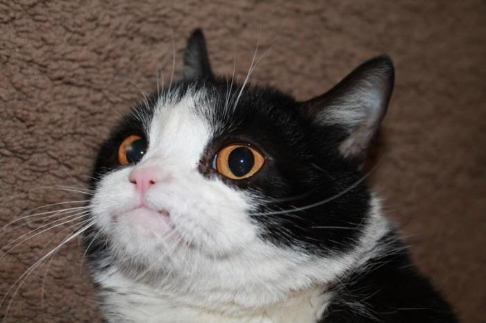 мрачный кот
