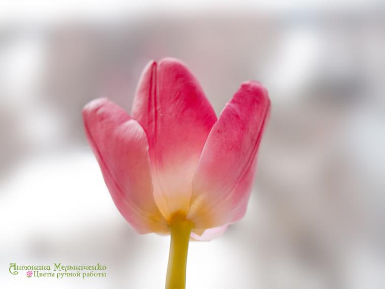 лепка, холодный фарфор, тюльпаны