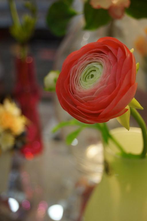 полимерная глина, керамическая флористика, холодный фарфор, лепка из полимерной глины, лепка цветов, школа лепки цветов, белла роза