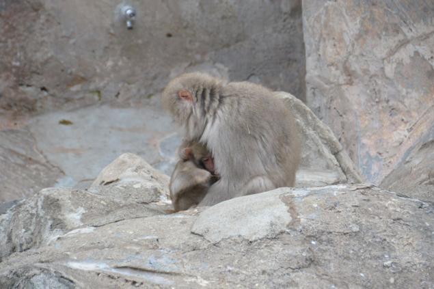 Дикий забег по Токио за 7 дней. День пятый. Зоопарк Уэно и детские магазины., фото № 14