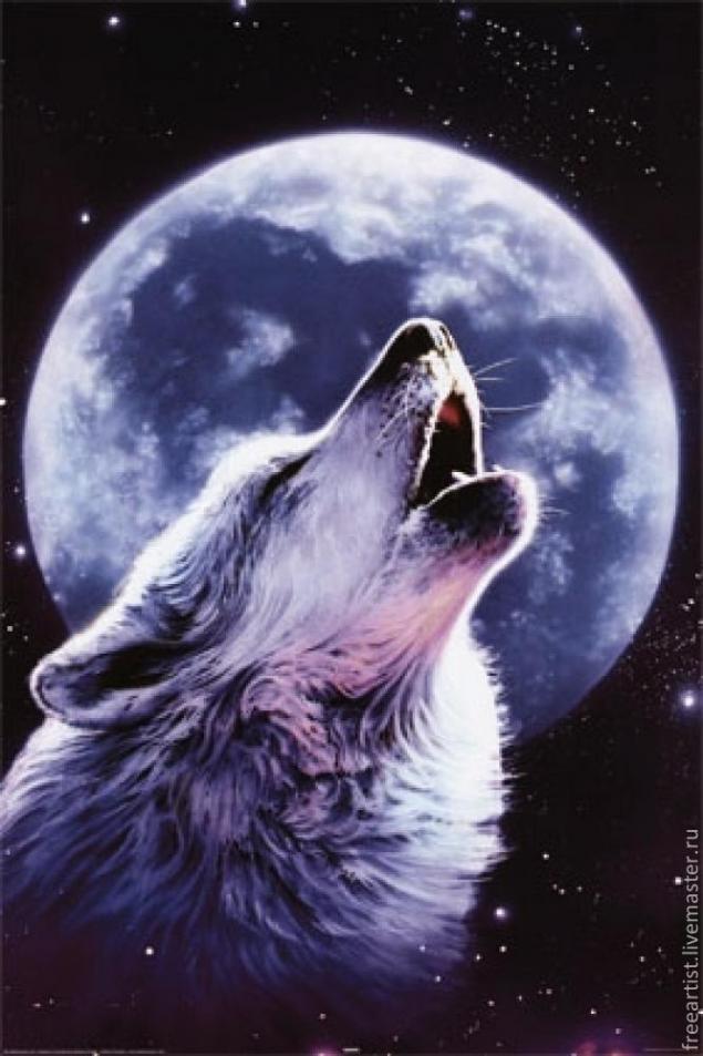 волк и луна картинки - фото 11