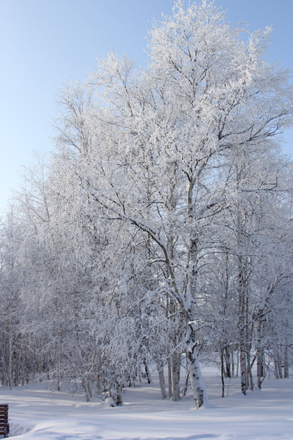 солнечный день, белый, снег