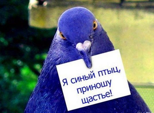темно синий цвет