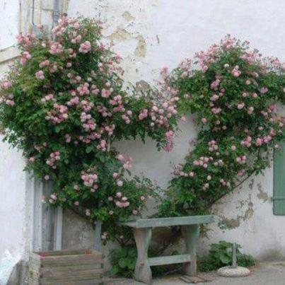 Я в саду! Заходите!, фото № 8