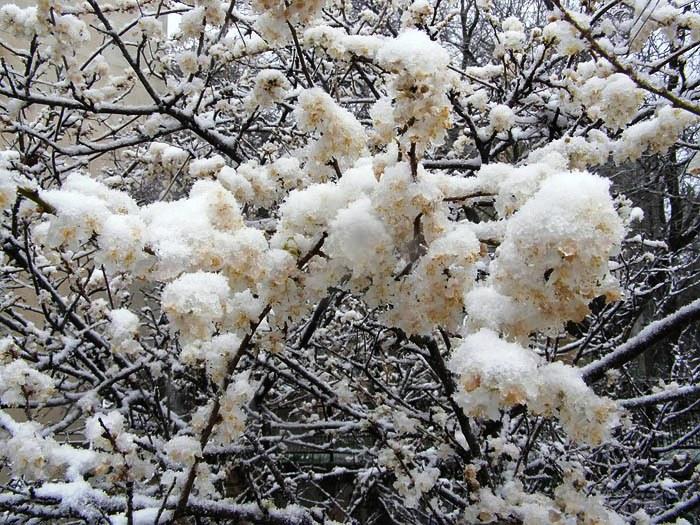 крым, снег, праздник